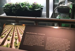 hunger games exhibition plants