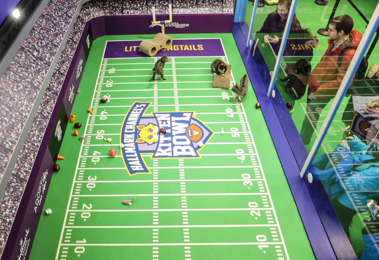 Hallmark Spreads the Love at Super Bowl with Kittens, a Pop-Up and a Social Media Campaign