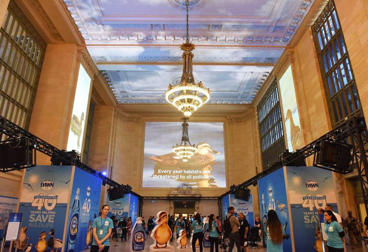 Dawn Celebrates 40 Years of Wildlife Rescues with a Grand Central Terminal Activation
