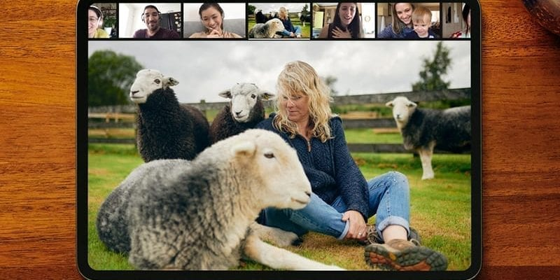 airbnb_experiences_sheep-2020